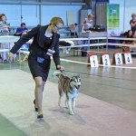 international-exhibition-russian-championship-and-the-continent-union-iku