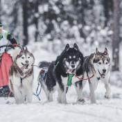 11.02.2018 Чемпионат Калужской области